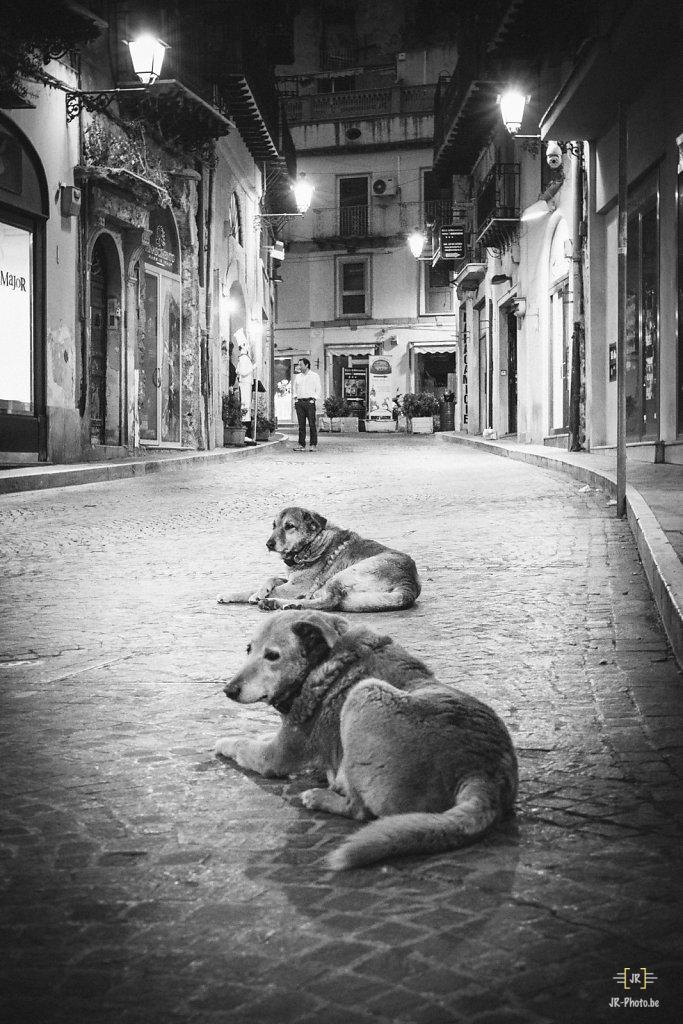 Photo de rue - Dog street?